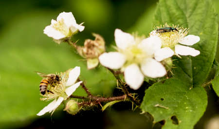 A bee and a bug dining on flowers Archivio Fotografico