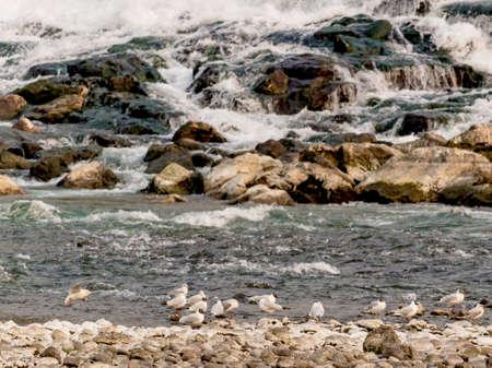 A randez vou of seagulls