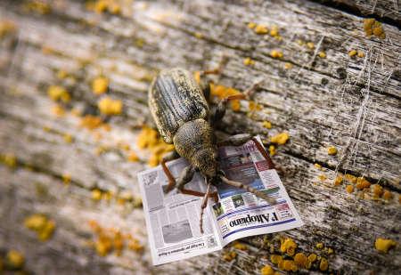 irony: Beetle Irony Surrealims Stock Photo