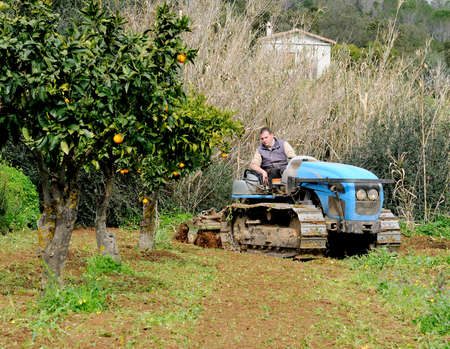 crawler: Weeding and milling of a vegetable garden with a crawler tractor