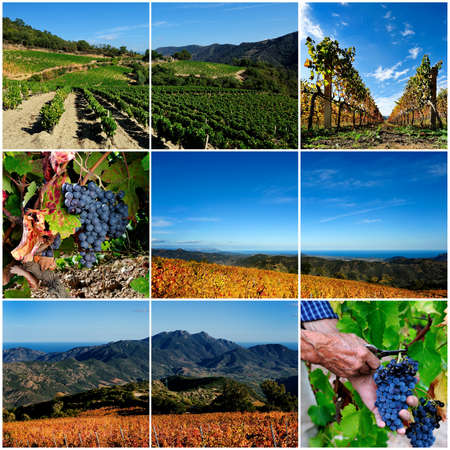Collage of photographs with the theme the vineyard and its cultivation photo
