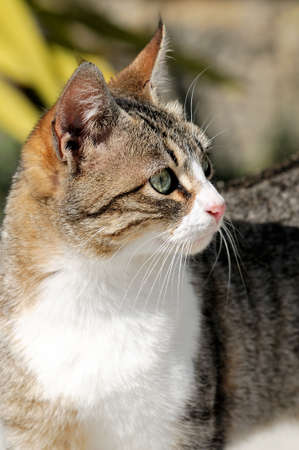 Portrait of a domestic cat photographed outdoors on a sunny day Stock fotó