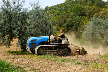 Weeding and milling of an olive grove with a crawler tractor photo