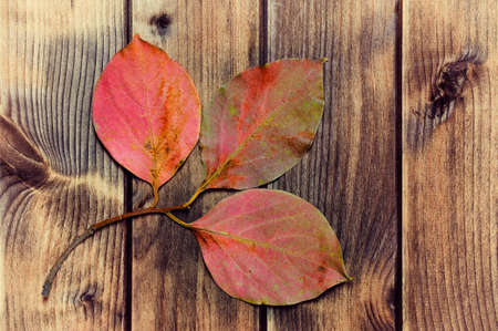 Composition of colorful autumn leaves on an antique wooden table