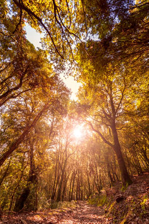 Beautiful sunset on a path inside an oak forest in autumn, with the suns rays filtering through the branches.