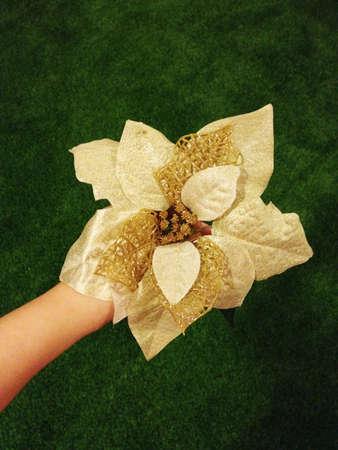 Hand holding christmas flower decoration. Stock Photo