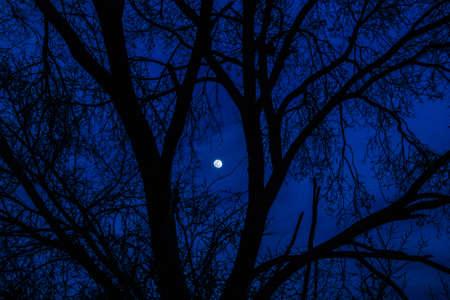 maan achter een boom