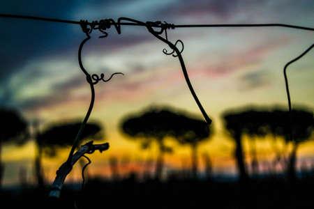 zonsopgang op het platteland Stockfoto