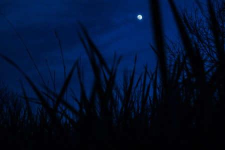 maan achter gras
