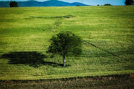 boom in het midden van een kamp