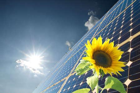 array: Sunflowers and solar panel Stock Photo