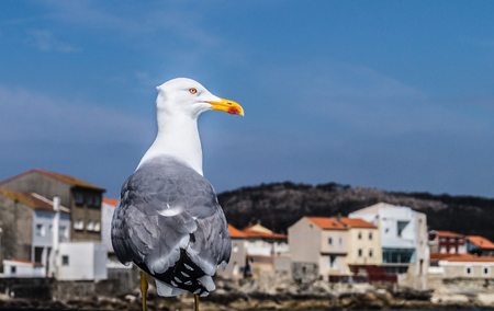 Just hanging around in Corrubedo, I found an old friend of mine. One of those moments you are glad to have your reflex.