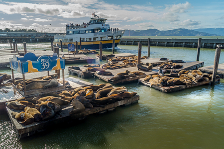 Pier 39, sea lions and ferry