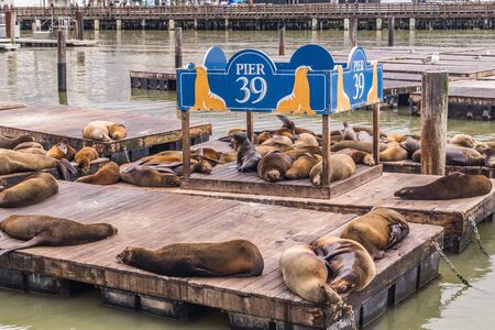 Sea Lions Resting at Pier 39