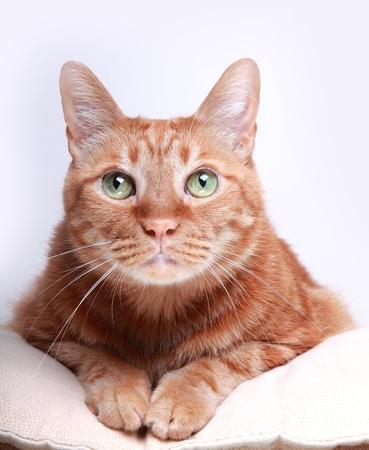 cats: gatto
