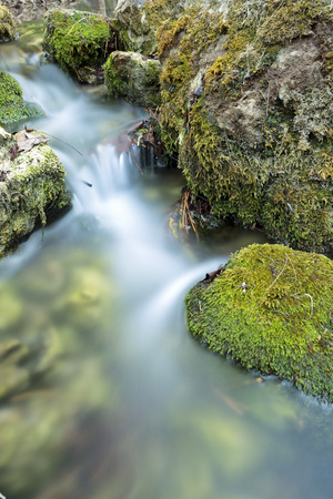 Wood River in summer, passing by the munipal term of Paterna del Madera, Albacete, Spain. Vertical capture with green tones.
