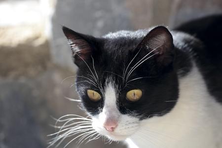 cat. Shooting horizontal with light natural. Stock Photo