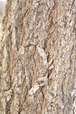 macrophotography: Bark of a tree photographed closely to appreciate its texture