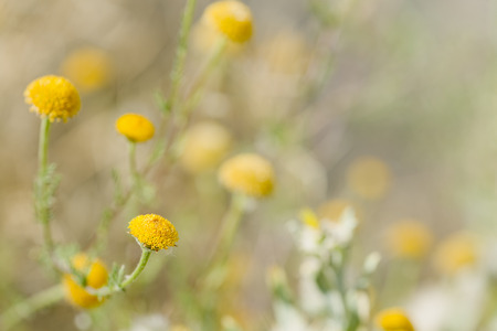 macrophotography: Macro photography of a wild plant in spring. Place of take in the province of Alicante, Spain