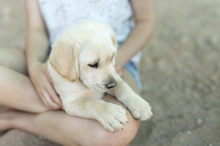 sweetie: Portrait of small golden retriever puppy with natural light.