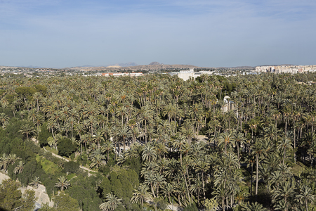 Palm grove of elche with more than 200.000 specimens, is the largest palm grove in Europe. Фото со стока
