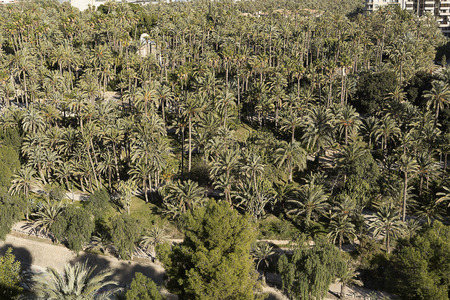Palm grove of elche with more than 200.000 specimens, is the largest palm grove in Europe. Reklamní fotografie