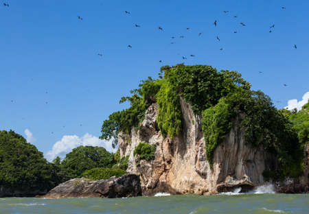 Rocks and birds in Los Haitises park in the Dominican Republic 写真素材