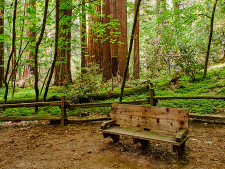 Resting place within redwood forest in Henry Cowell State Park, California Stock Photo