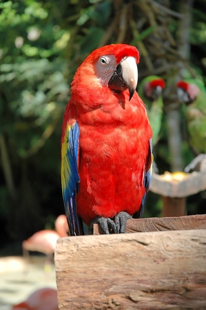 copycat: colorful parrot in a branch