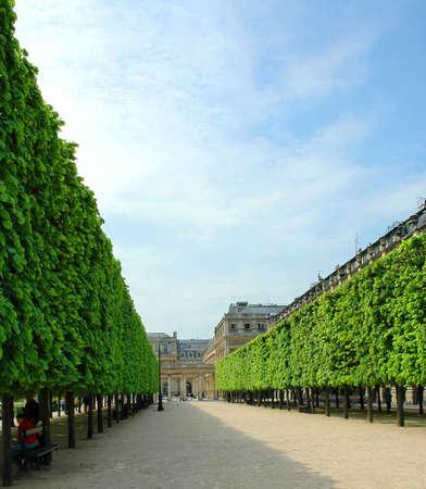 sculpted: De baan van gebeeldhouwde bomen in de tuin van het Palais Royal in Parijs