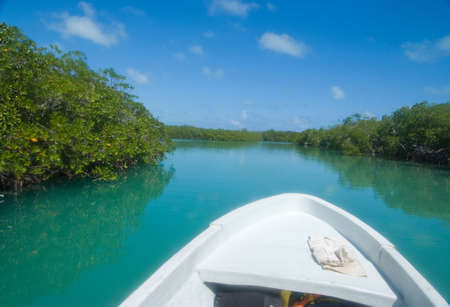 Prow of a boat heading to a tropical mangrove swamp photo