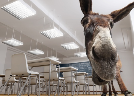 muti:    A donkey in a classroom ( in many countries this has a bad pupil connotation)   Archivio Fotografico