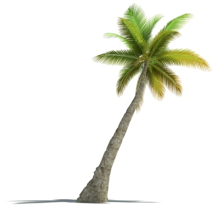 3D rendering of a palm tree on a neutral white background  Stock Photo