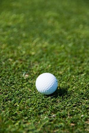 White golf ball against the green grass   photo