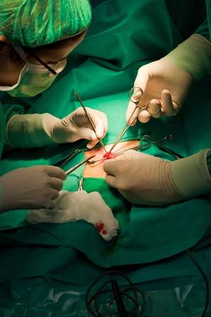Close up detail of a surgery Stock Photo - 12528914