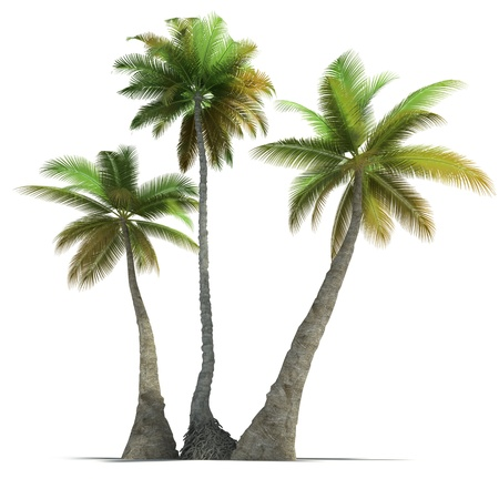 three objects: 3D rendering of three  palm trees on a neutral white background  Stock Photo