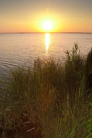 Sun setting in rice fields and water, in La Albufera photo