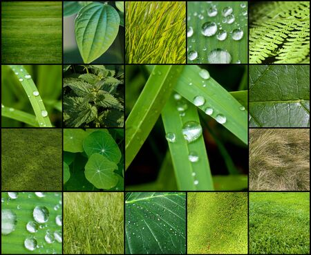 Collection of images of green plants and textures photo