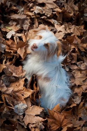 dead dog: Dog looking at the camera standing on dead leaves