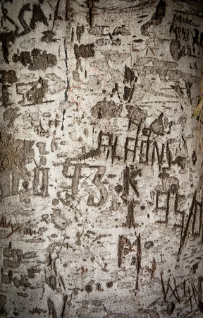 scarring: Close up shot on a tree truck with names and dates