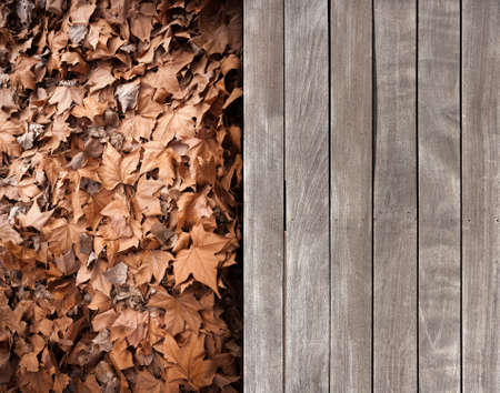 Contrasting texture of wooden deck and dead leaves