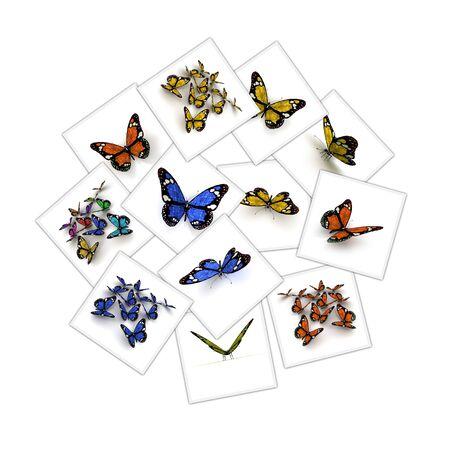 renderings: Collage of different renderings of colorful butterflies