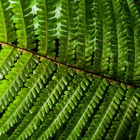 uncultivated: Close up view on fern leaves