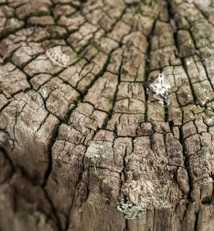 splintered: Old tree stump ideal for backgrounds and textures Stock Photo