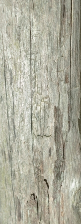 weather beaten: Old weather beaten wooden planks