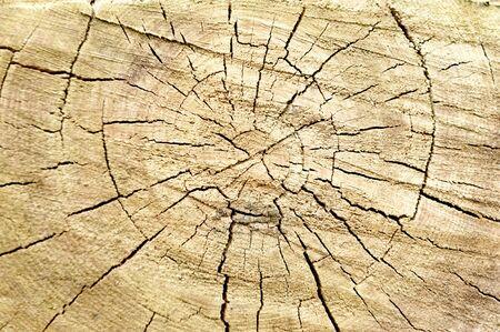 weather beaten: Vecchio ceppo ideale albero per gli sfondi e texture Archivio Fotografico