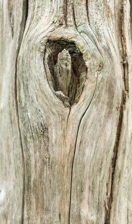 splintered: Close up shot on an old tree trunk
