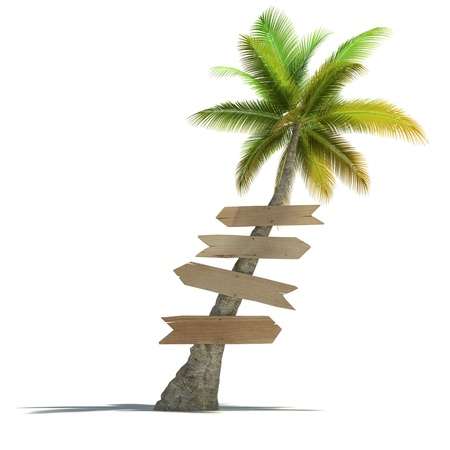 signpost: Palm tree with signboards attached to the trunk in a neutral background