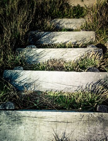 invaded: Wooden steps invaded by vegetation