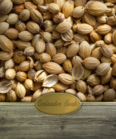 coriander seeds: Coriander seeds  on Rustic wooden frame with golden label